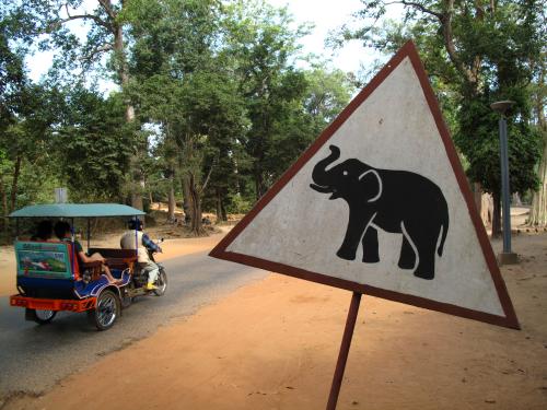 Uwaga slonie
