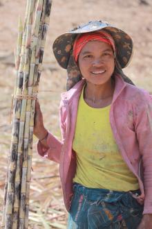 Kobieta Akha pracujaca na polu trzciny cukrowej