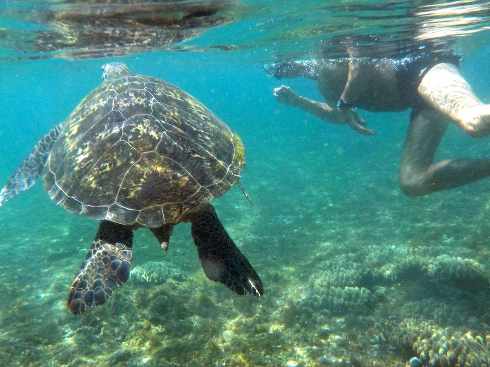 Proszę Państwa, oto żółw (zdjęcie udostępnione przez współtowarzyszy wycieczki)